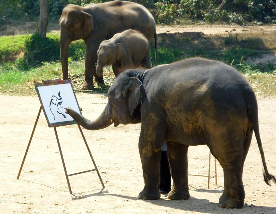 Malender Elefant