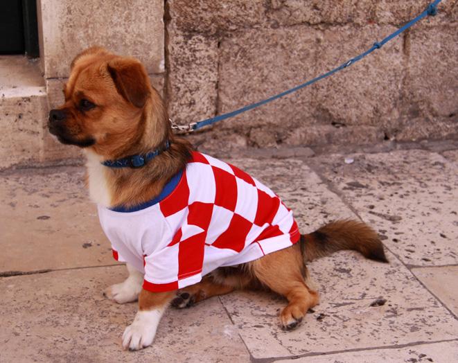 War es nun mehr der Nationalstzolz von Frauchen oder hat der Vierbeiner seinen eigenen? Gesehen im Juni 2012 in Dubrovnik (Kroatien)