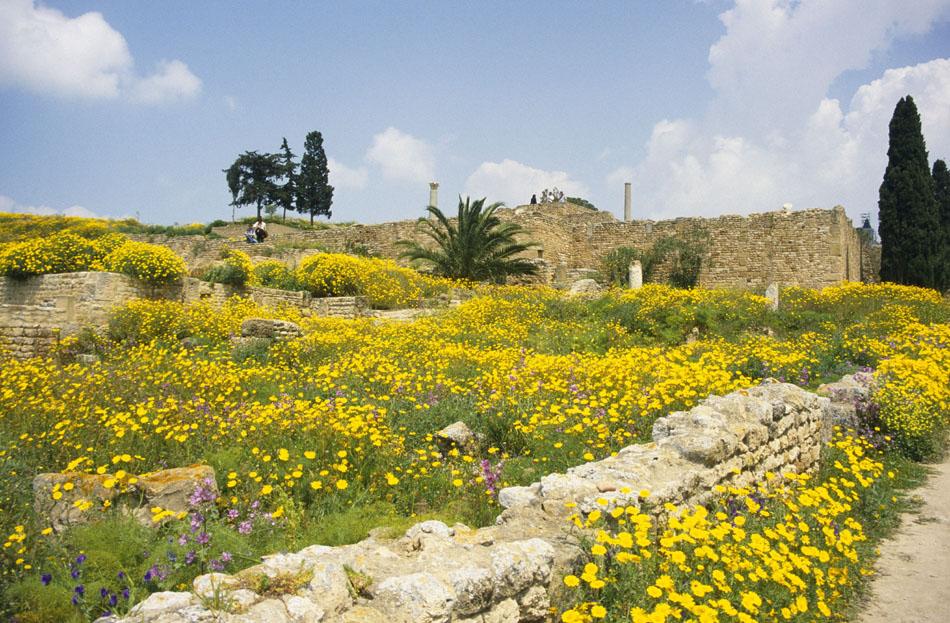 Karthago 1