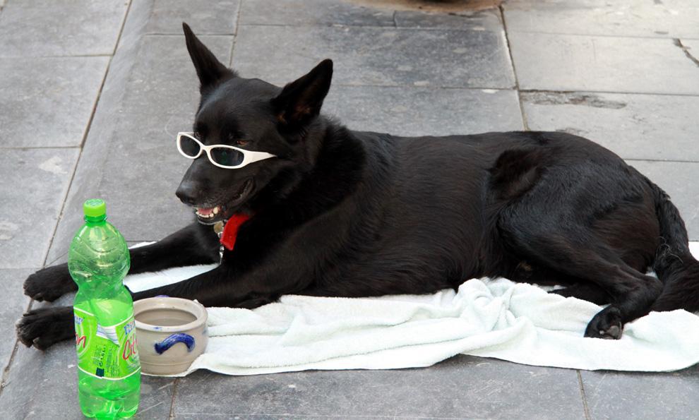 Betteln für die Hundesteuer?