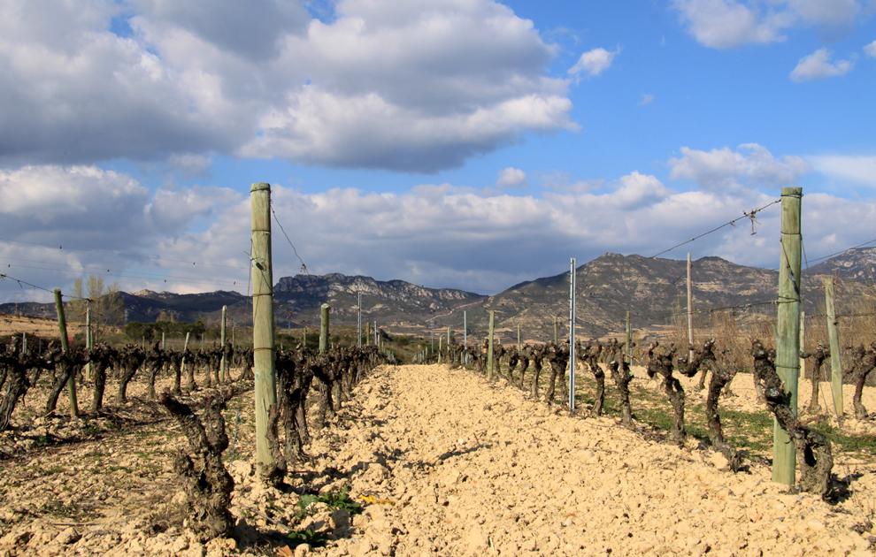 """Tempel im Weinberg: """"taz"""" Im spanischen Weinanbaugebiet La Rioja gibt es wunderbare Verkostungen. Aber nur zum Trinken sind die Bodegas viel zu schade. Einige von ihnen sind architektonische Kunstwerke."""