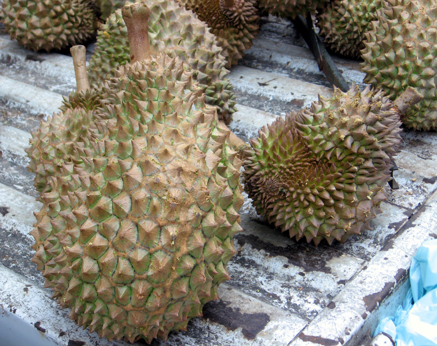 """Regarded by many people in southeast Asia as the """"king of fruits"""", the durian is distinctive for its large size, strong odour, and formidable thorn-covered husk. Love it, or hate it!"""