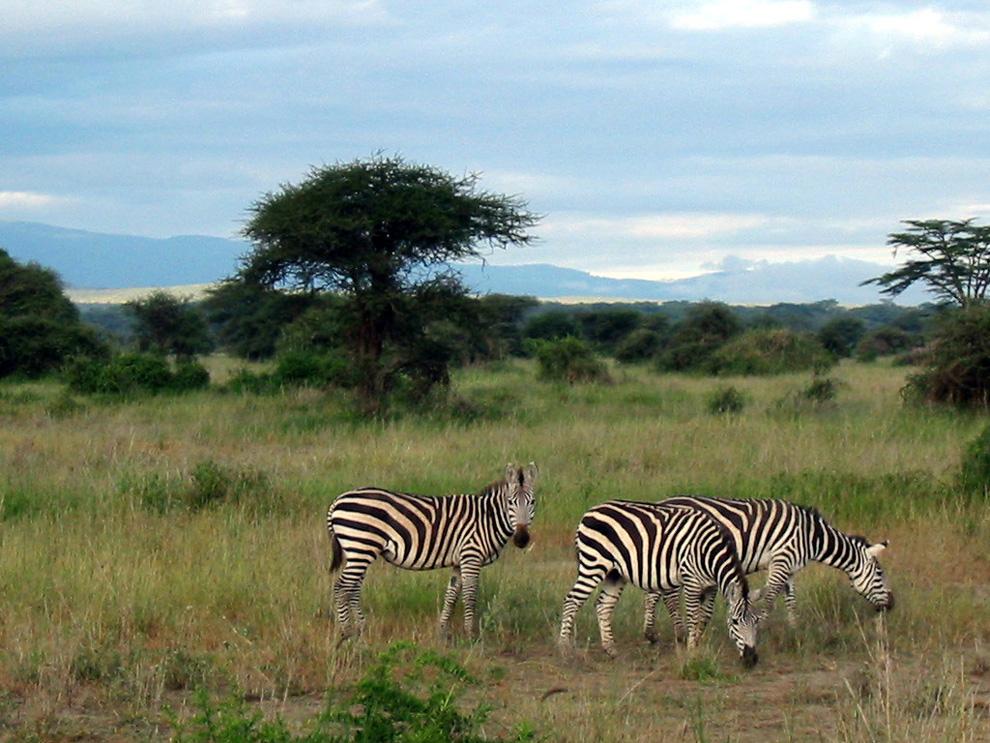 """Jenseits von Afrika: """"FAZ"""" Hier Armut, dort Luxus: Tansania und der Safari-Tourismus – eine Reise durch die Nationalparks Ruaha und Serengeti."""
