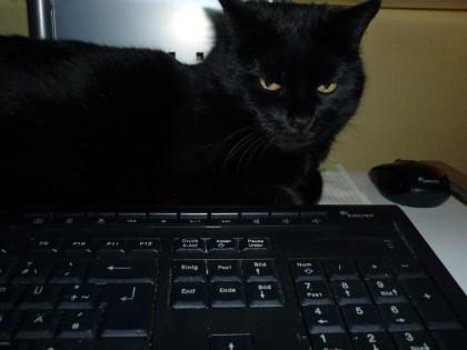 """Meine """"Schwarzarbeiterin"""" ist während unserer Abwesenheit ebenso versorgt wie zwei weitere Katzen. Sonst hätten wir auch keine Ruhe unterwegs!"""