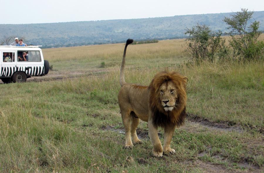 Nur Lebensmüde verlassen auf einer Safari den Schutz bietenden Jeep, um ein Foto zu machen!