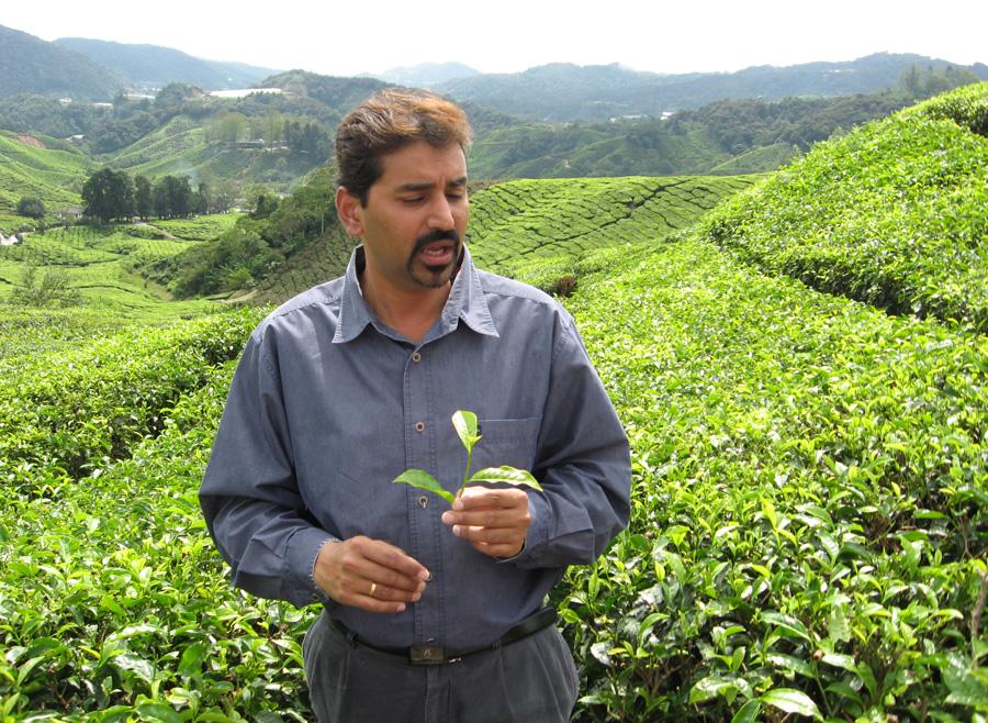 Teeanbau in Malaysia