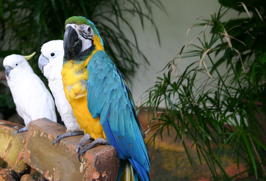 Ein Besuch des KL Bird Park ist ein Erlebnis, das wir nicht hätten missen wollen. Ca. 12,50 Euro für den Eintritt sind gut angelegtes Geld!