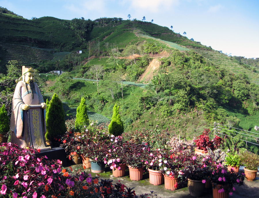 Tour Cameron Highlands