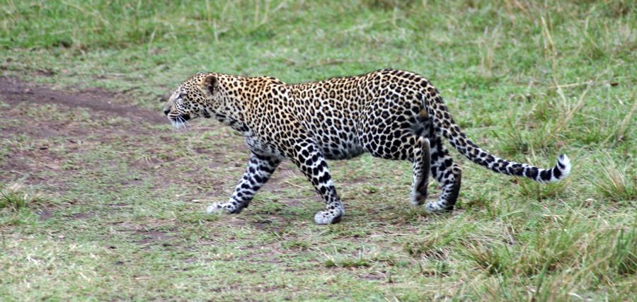 """Friedliche Jagd auf die großen wilden Tiere: """"Die Welt"""" Ist Südafrikas Vorzeige-Grünfläche, der Krüger-Nationalpark, ein Garten Eden? Leider nicht. Denn der Mensch ist ein wildes, tödliches Tier. Eine Safari zu den """"last unicorns""""."""